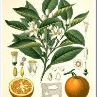 Botanical Print Bonanza