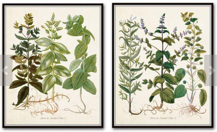 botanicaletsy2